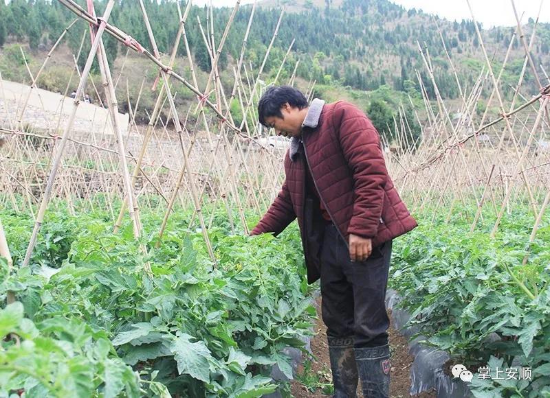 """普定陇黑村蔬菜产业园:百姓增收的""""绿色银行"""""""