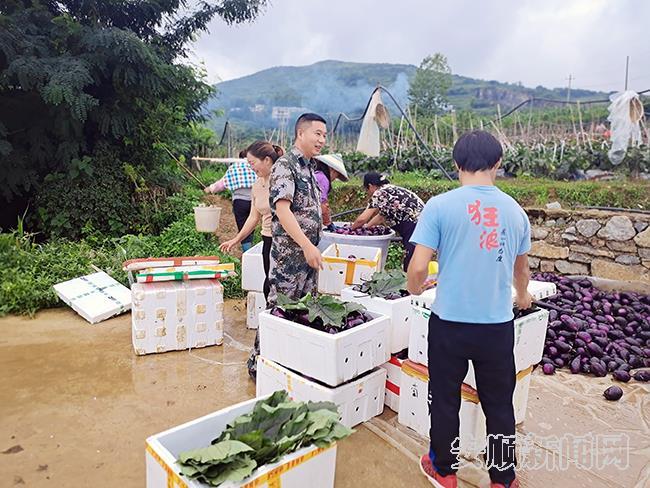 平坝区白云镇平元村肖正强同农户一道销售茄子.jpg