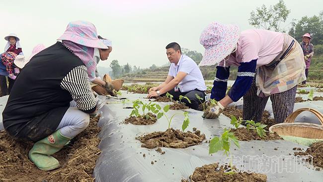 旧州镇茶岭村兵支书林显才帮助村民一起种菜.jpg